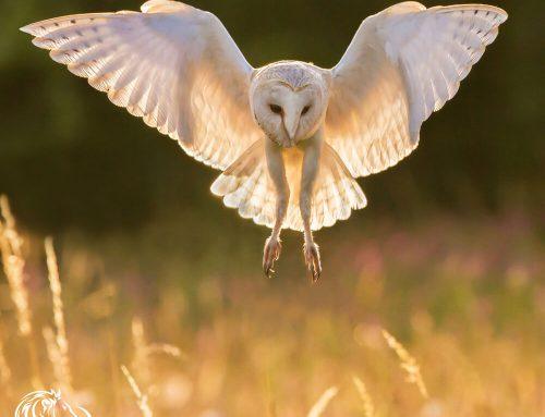 Wildlife Photography Part 1 – Tracey Lund