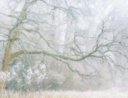 Simon Turnbull – Intimate Landscapes